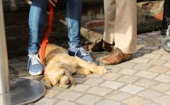 Dog Festival 5