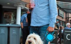 Dog Festival 7