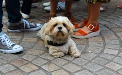 Dog Festival 9