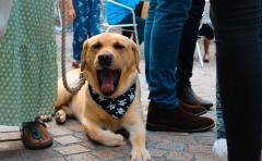 Dog Yawn Neckerchief 1