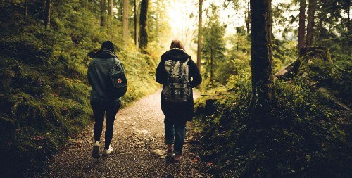 Two people walking in the forest