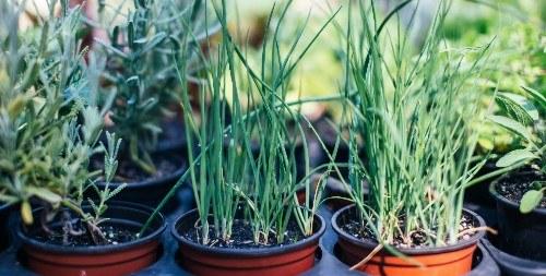 Growing plants in pots