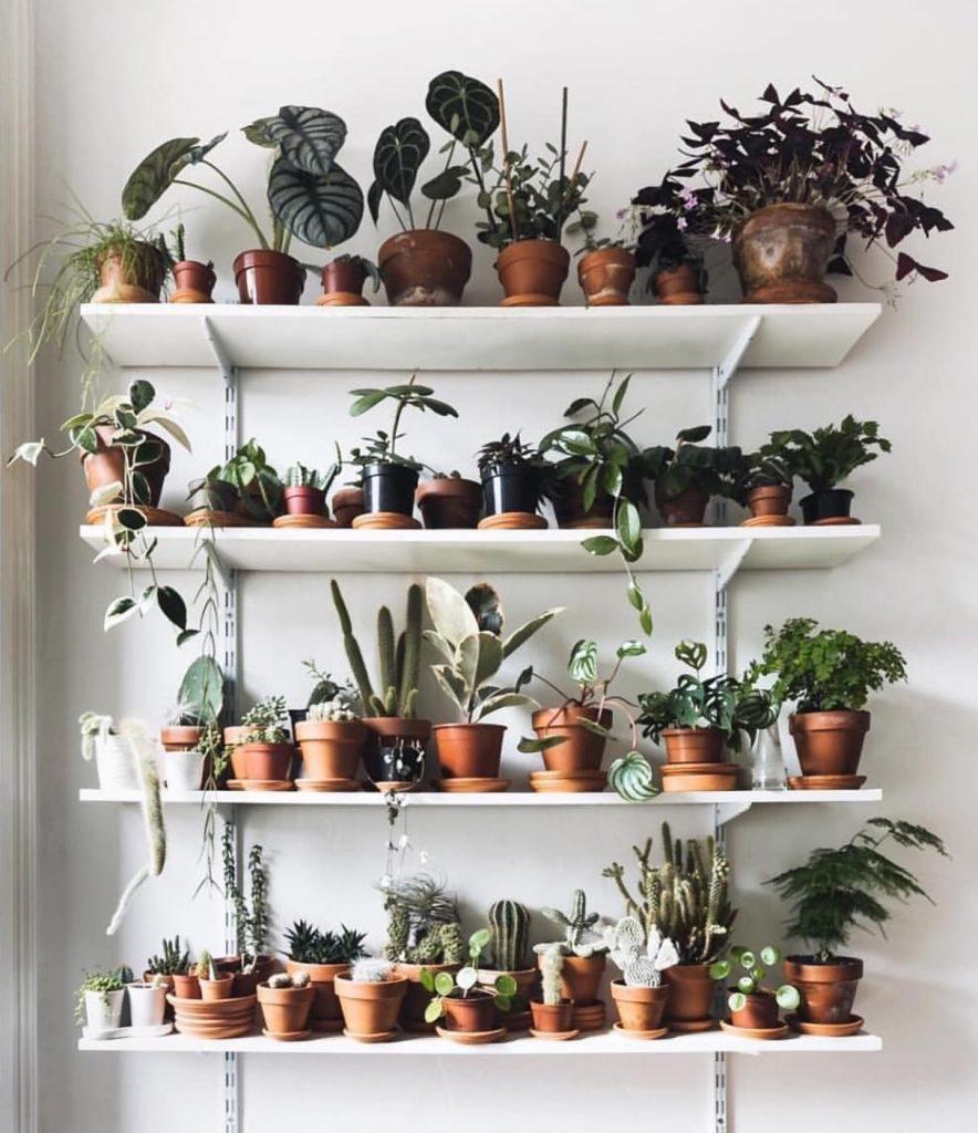 DECO: PLANTLOVER