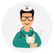 Assurance-santé-chat-Angora