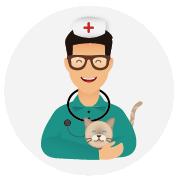 Assurance-santé-chat-Ragdoll