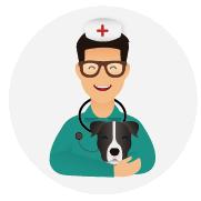 Assurance-santé-chien-American_Staffordshire_Terrier