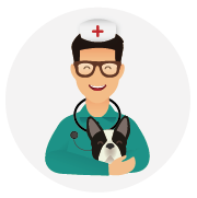 Assurance-santé-chien-Bouledog_Français