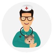 Assurance-santé-chien-Yorkshire_Terrier