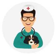 Assurance-santé-chien_Cavalier_King_Charles.png