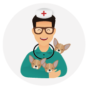 Assurance-santé-chien-Chihuahua