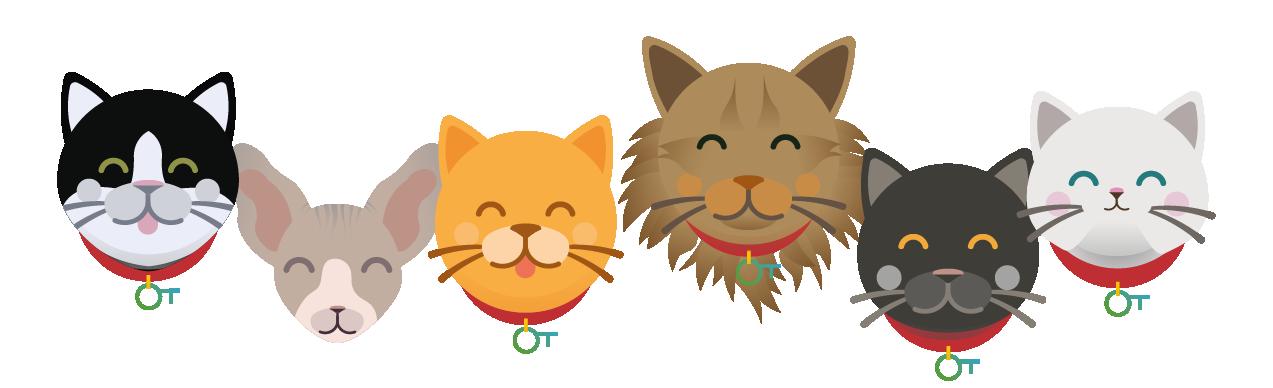 assurance-sante-chat-sans-franchise