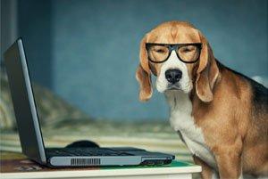 comment-choisir-assurance-chien