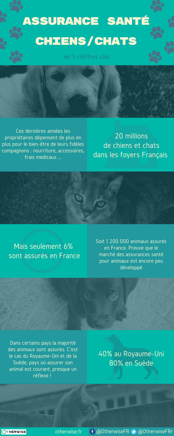infographie chiens chats