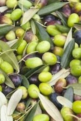 Olives of all different kinds