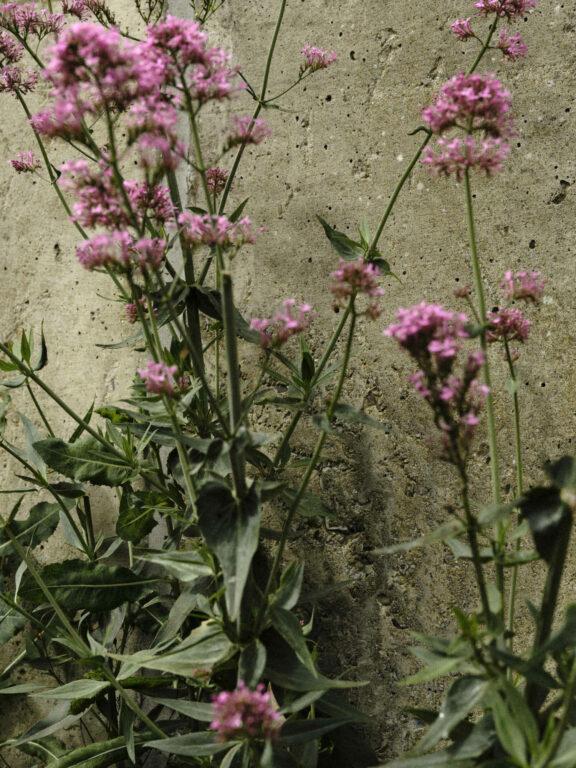 Impossible Blossom on Violet Book Online (en-GB)