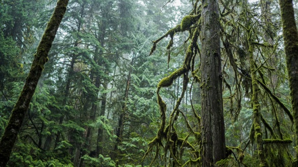 Arc'teryx partners with Leave No Trace