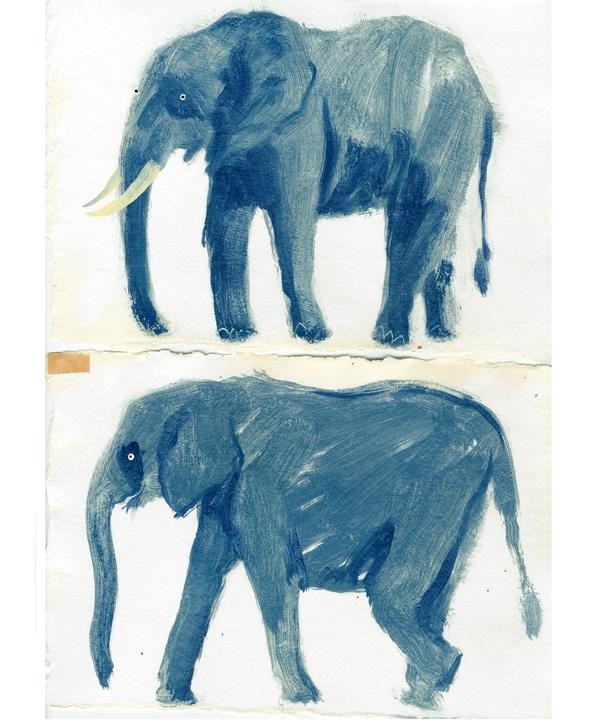 holly_frean_original_elephant_sketches