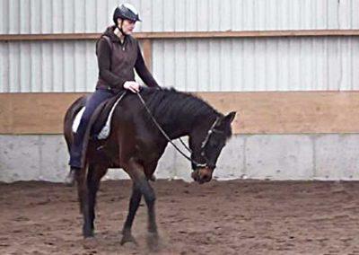 een paard op stal