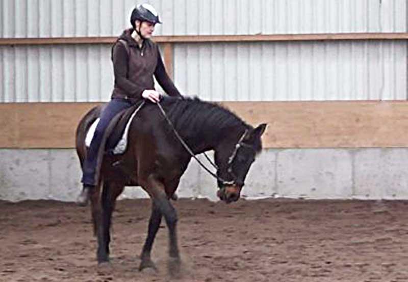 Een gast-paard op stal