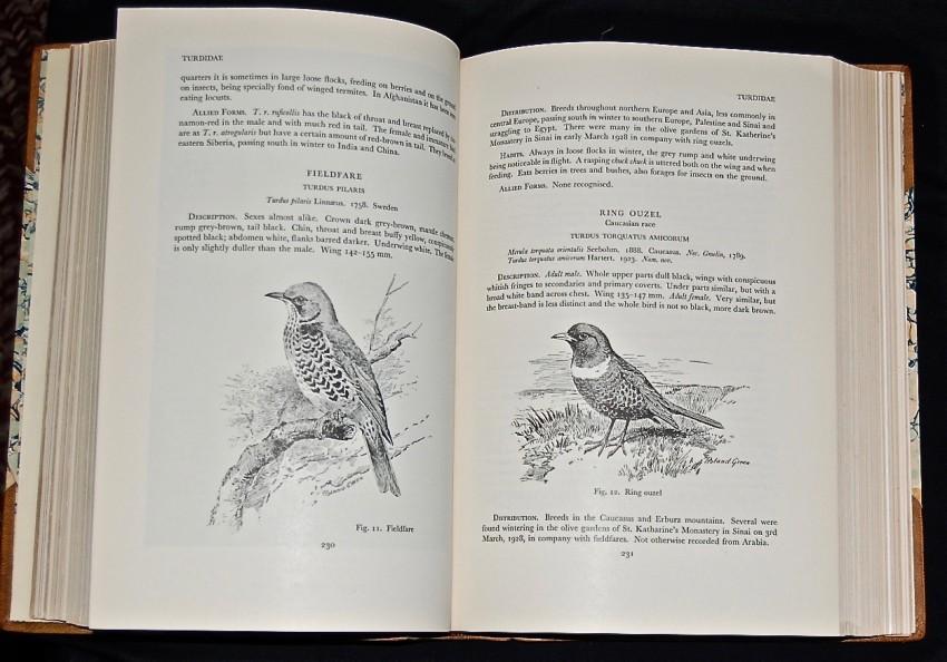 Bildergebnis für Meinertzhagen + Birds of Arabia
