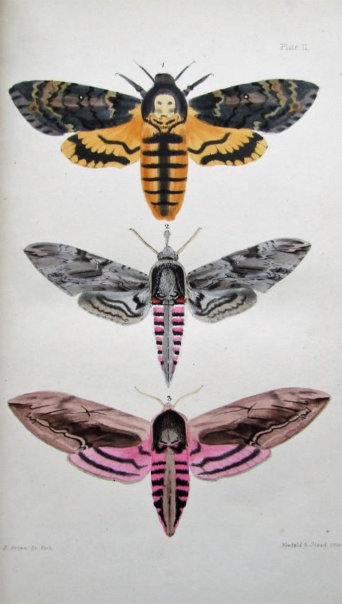 A Natural History of British Moths