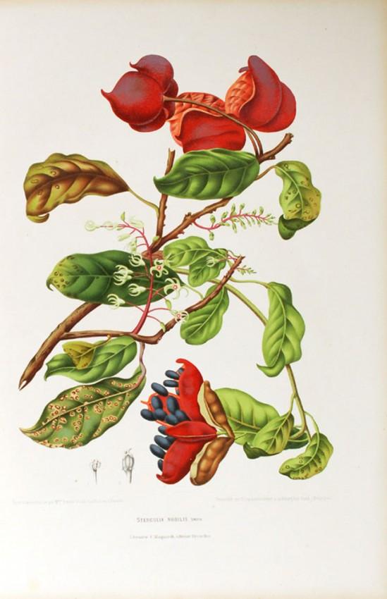 FLEURS, FRUITS ET FEUILLAGES CHOISIS,