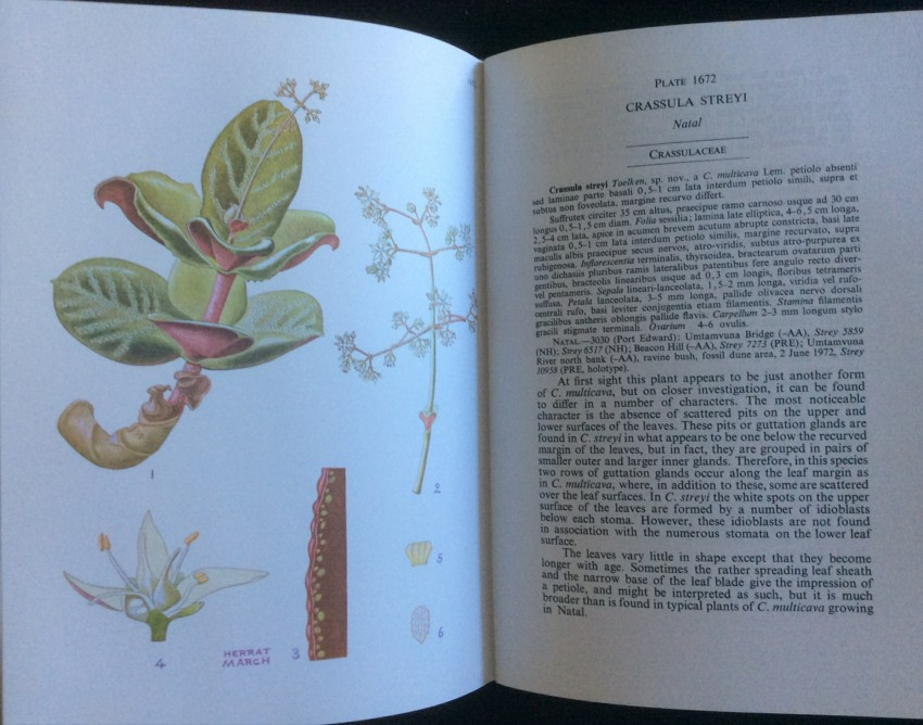 The Flowering Plants of Africa (Vol 42 only) (half-bound in green-calf)
