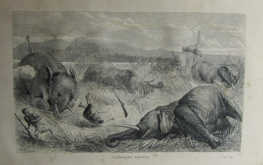 ELEPHANT HAUNTS