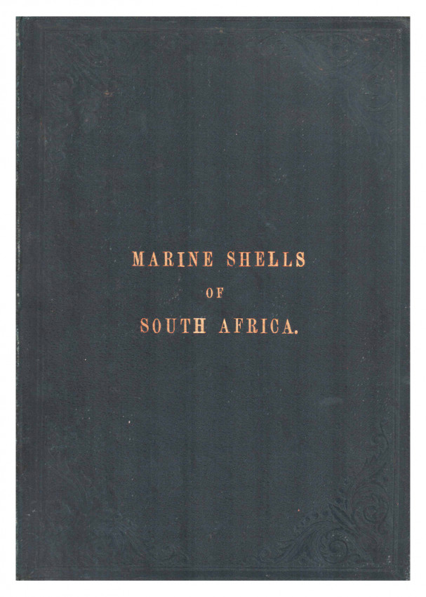 MARINE SHELLS OF SOUTH AFRICA