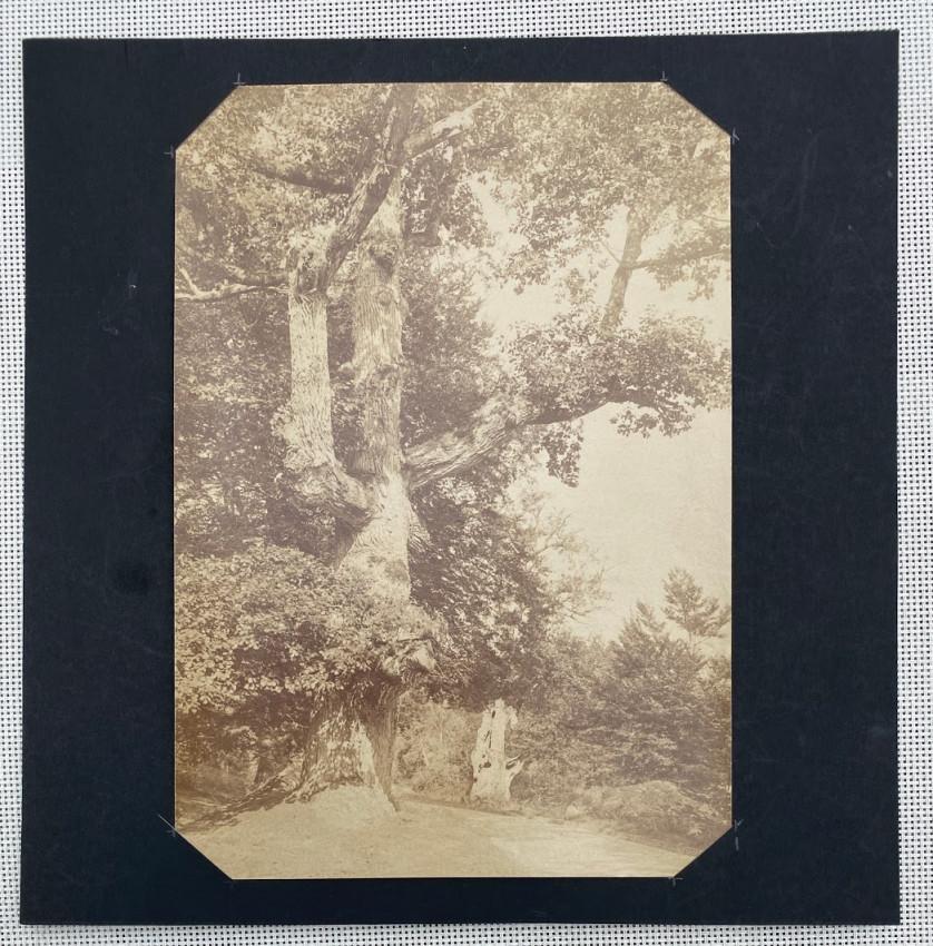 [Two tree studies]