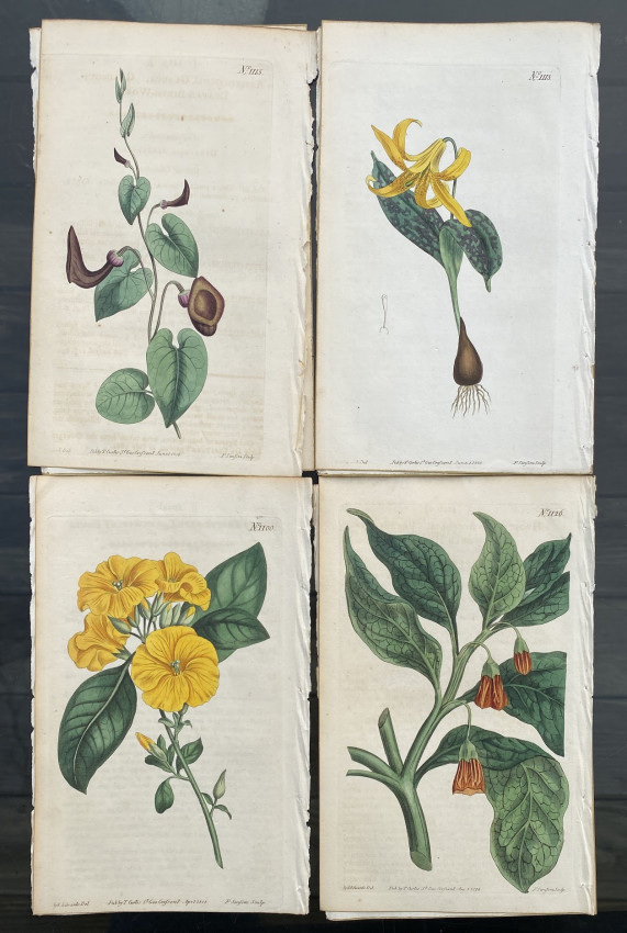 [A collection of 16 hand-colored engraved plates from Curtis's 'Botanical Magazine']