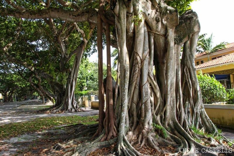 Que ver en Miami en 2 dias Coconut Grove Coral Gables