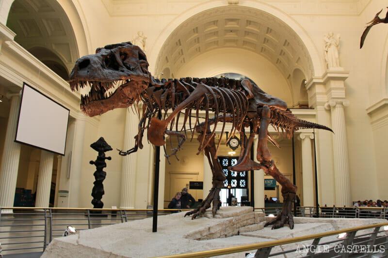 Qué ver en Chicago en dos días - Field Museum