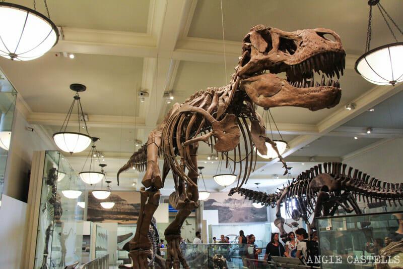 Curiosidades de Nueva York que te sorprenderán: el Museo de Historia Natural