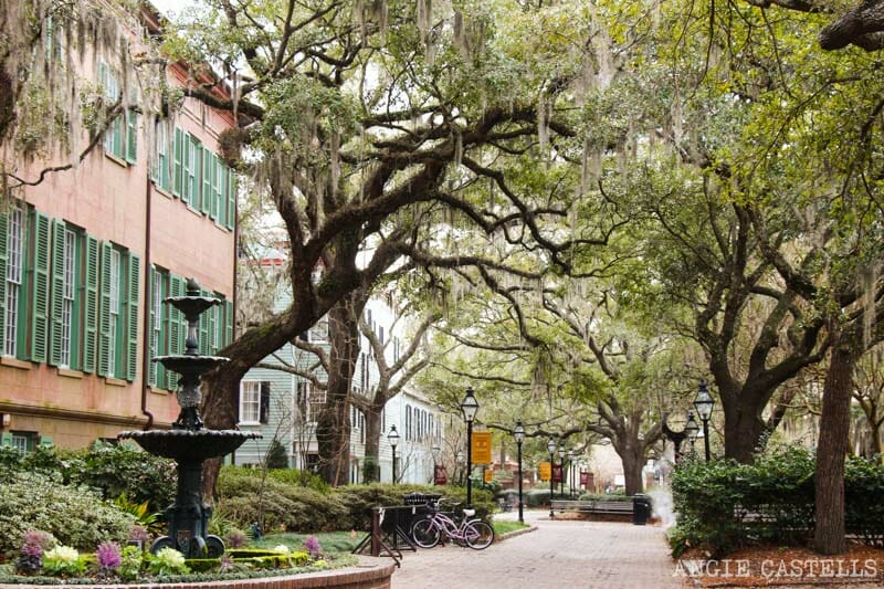 Guía de Charleston: Qué ver en 2 días - Charleston College