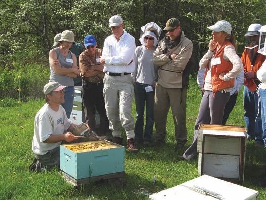 10 помилок бджолярів-початківців