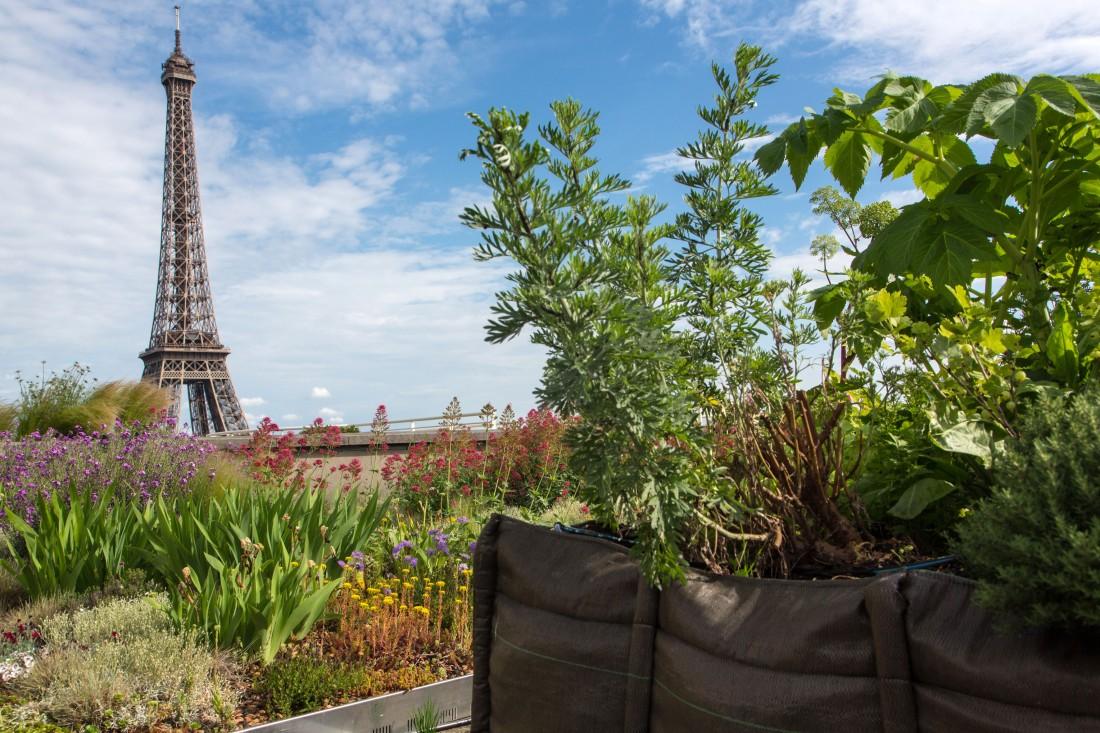 Potagers sur les toits de Paris avec la Tour Eiffel au loin