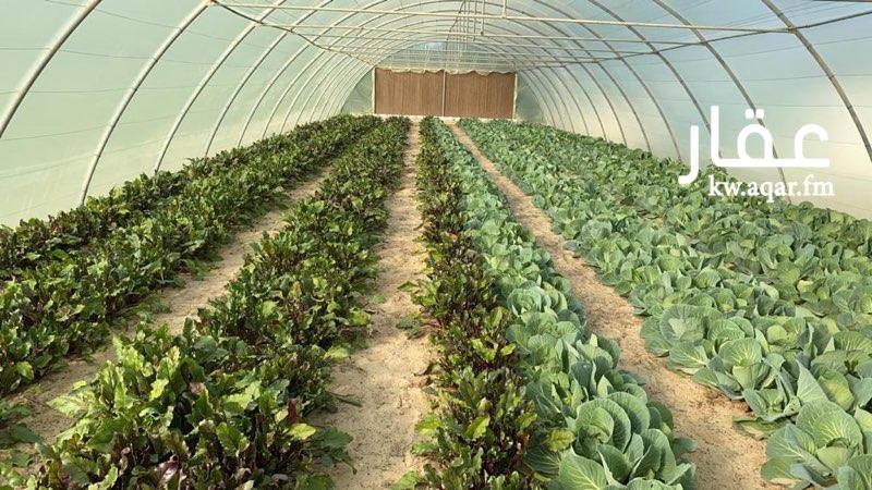مزرعة للبيع فى قطعه 10, الوفرة 61