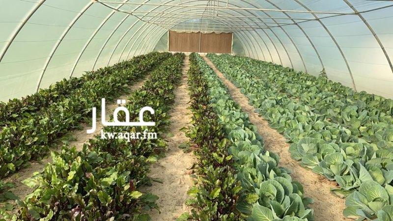مزرعة للبيع فى قطعه 10, الوفرة 0