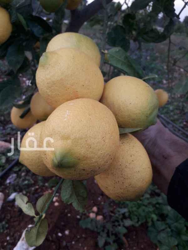 مزرعة للبيع فى شارع مبارك الكبير ، حي قبلة ، مدينة الكويت 0