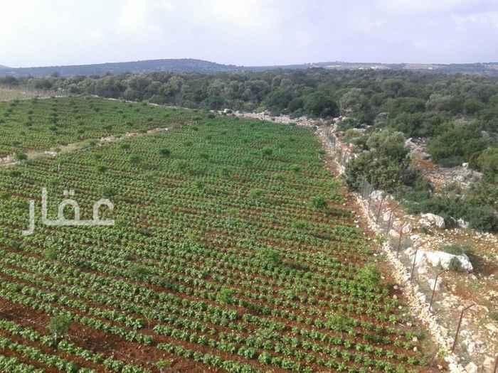 مزرعة للبيع فى شارع مبارك الكبير ، حي قبلة ، مدينة الكويت 61