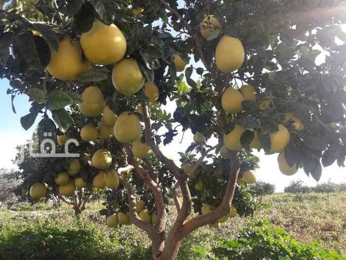 مزرعة للبيع فى شارع مبارك الكبير ، حي قبلة ، مدينة الكويت 8