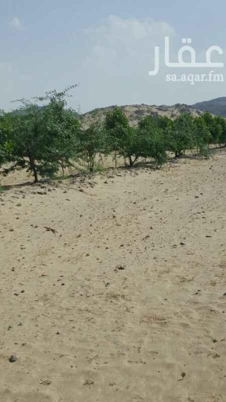 مزرعة للبيع فى المملكة العربية السعودية 6