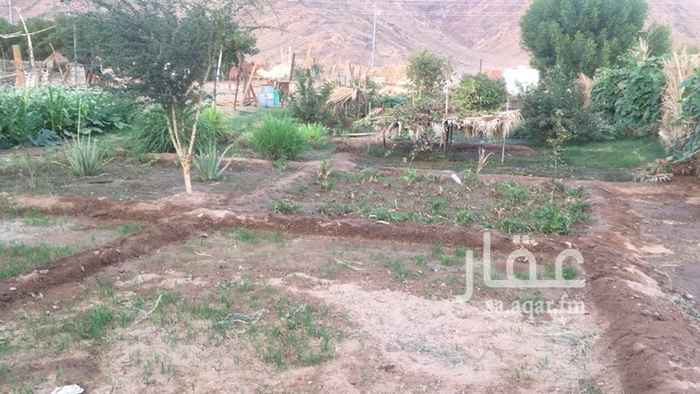 مزرعة للبيع فى المملكة العربية السعودية 2