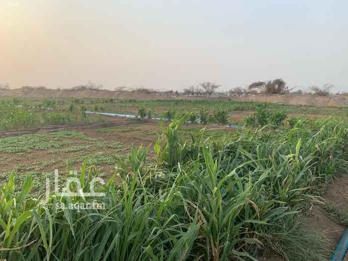 1798616 مزرعه مساحة ١٠٦الاف متر مربع بصك شرعي في الشاميه بها بيرين ماء حلو صالح للشرب مزروعه خضار بانواعها