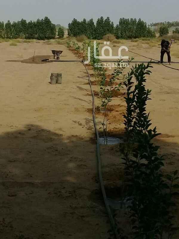 978513 مزرعه أما مستشفى الملك فهد  فيها بئر وشجر وزرع  خسران فيها  حجه