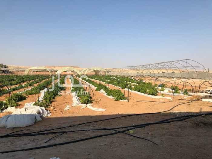 1312230 مزرعة جنوب الرياض