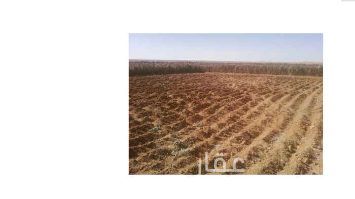 1687905 للايجار ارض مكشوفة لزراعة الخضار  المساحة 30000 متر  الموقع - بجوار مطار القصيم بجانب مزرعة رشيد البلاع (مصنع مرام للاعلاف)  للتواصل :- 0533740753 - 0537652224
