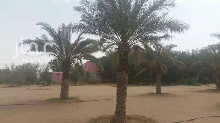 1664754 مزرعة متكاملة بها فيلا مساحتها ١١٠٠م مساحة المباني ٦٠٠م يوجد مسبح ١٥X٧،،يوجد اشجار متنوعة ومستودعات ضخمةوغرف عمالة في مناطق مختلفة من المزرعة. شوارع داخلية جزء منها مزفلت والآخر معبد. يوجد بها مسجد على افخم طراز يتسع ل ٥٠٠ مصلي مجهز بالكامل.كهرباء٤٠٠   مسورة بالكامل سور مسلح والجزء الخلفي شبوك. يوجد بها ثلاث بيوت شعر مقاس ٢٠X١٠ الكبير مع ارضيات رخام روزا فاخر متر في متر وكذلك بيتين شعر كل واحد عشرة في ستة مع نوافير وجلسات خارجية. يوجد هنقر ضخم مقاس ٣٠X10 المزرعة على ثلاث شوارع. بصك شرعي حديث.