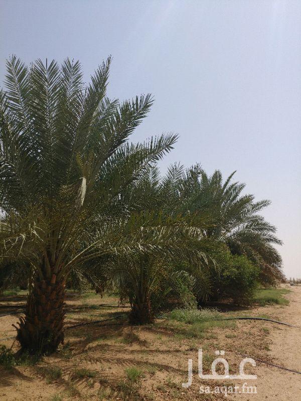 مزرعة للبيع فى المملكة العربية السعودية صورة 9